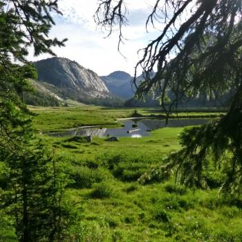 Big Meadow Green Dream
