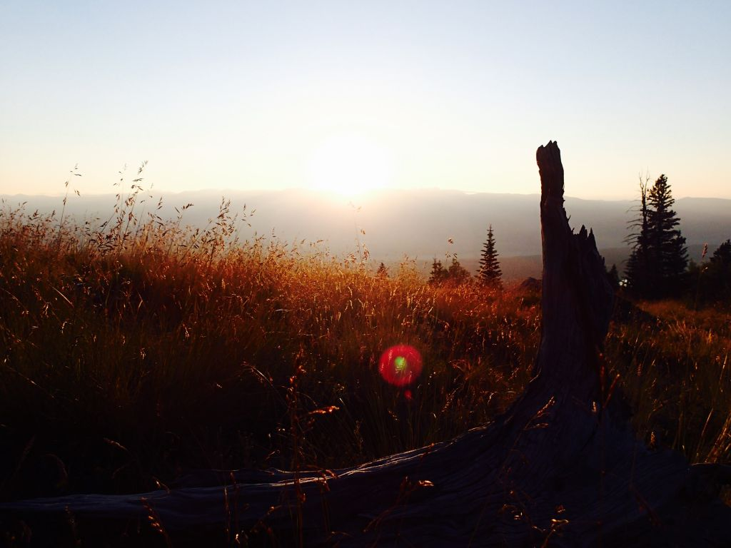 Mt Elbert Log at Sunrise