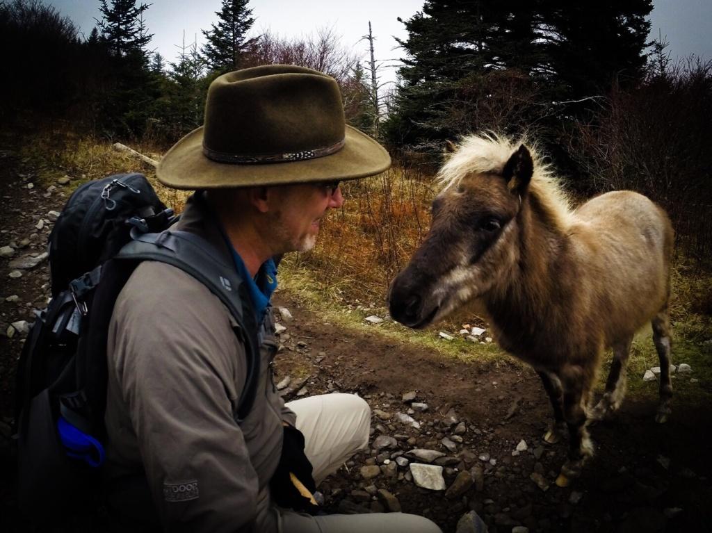 Mt Rogers Pony Stallion