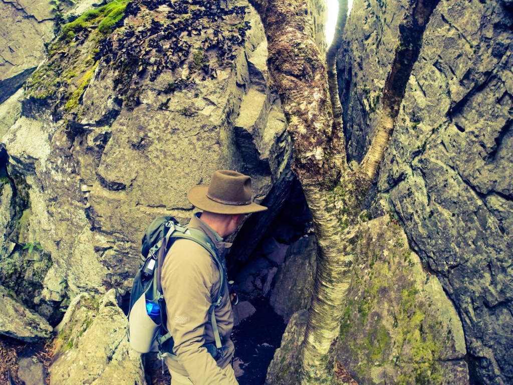 Mt Rogers VA Tree Embedded in Rock