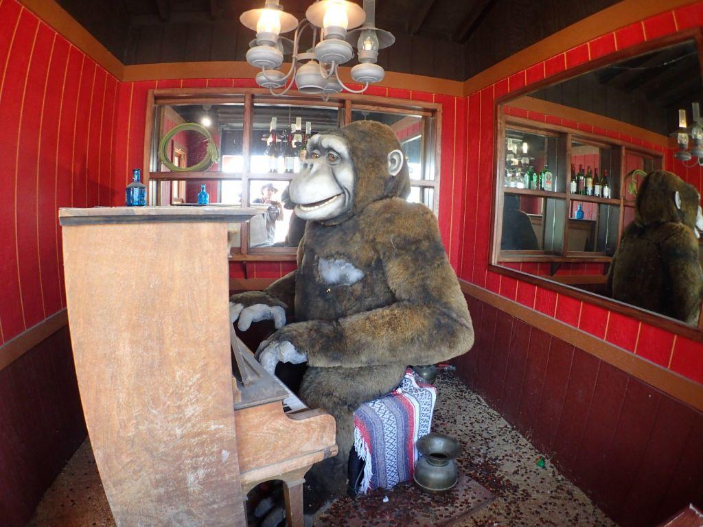 Piano Playing Gorillas