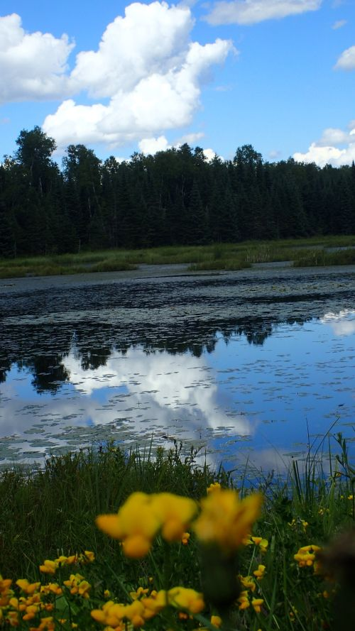 A serene pond I happened upon, just a few miles from the trailhead.
